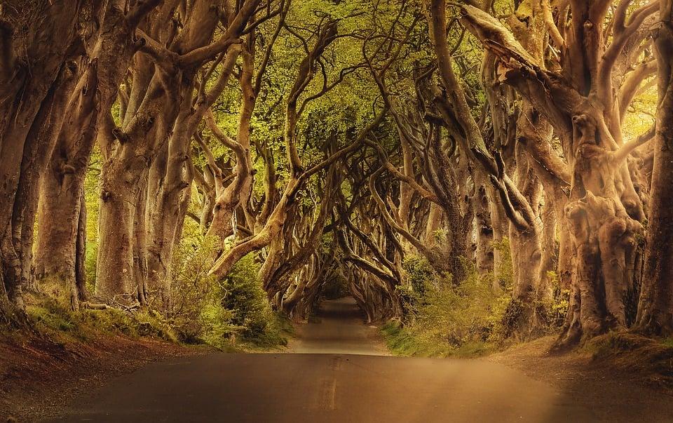 trees-3464777_960_720